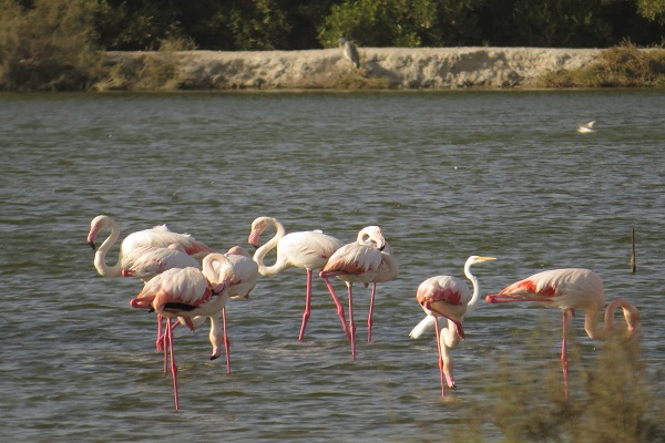 Ras Al Khor Bird Sanctuary